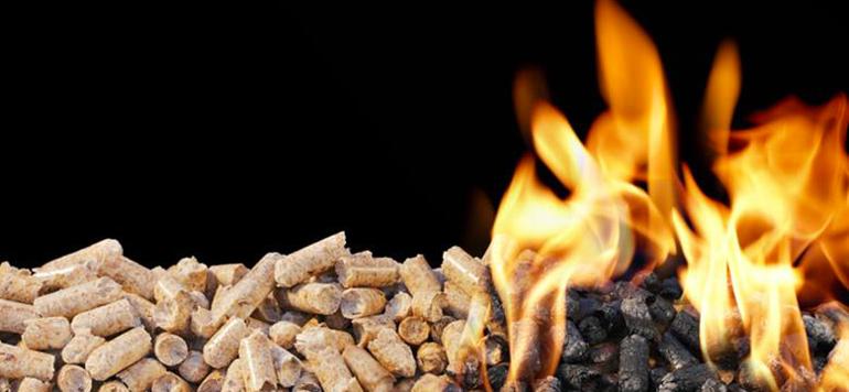 Energies renouvelables : fort potentiel pour la biomasse au Maroc