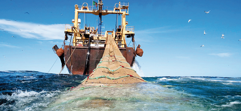 Pêche : hausse sensible des recettes et baisse des captures en 2017