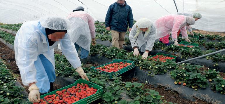 Exportations : les fruits rouges sur les traces des agrumes et de la tomate