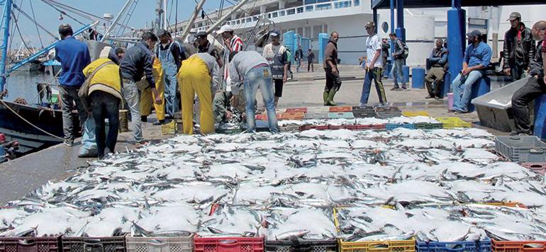 Pêche : Repli de 11% des débarquements au premier semestre 2018