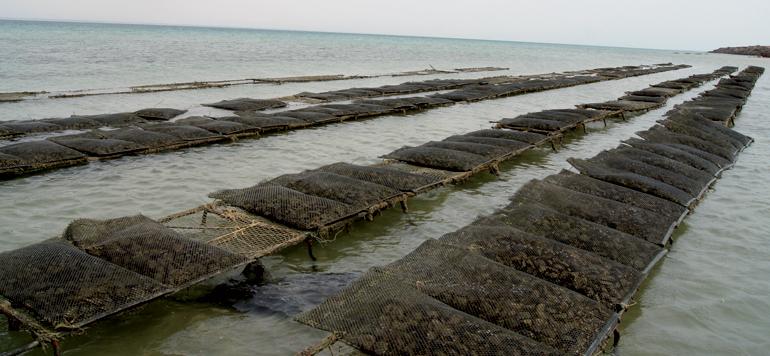 L'aquaculture amorce son décollage