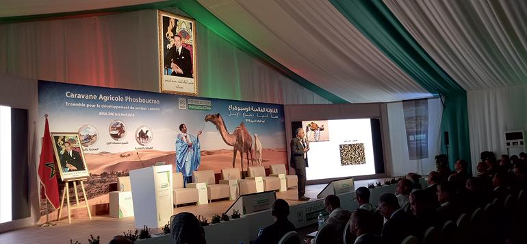 La filière cameline, une source de vie dans les provinces sahariennes