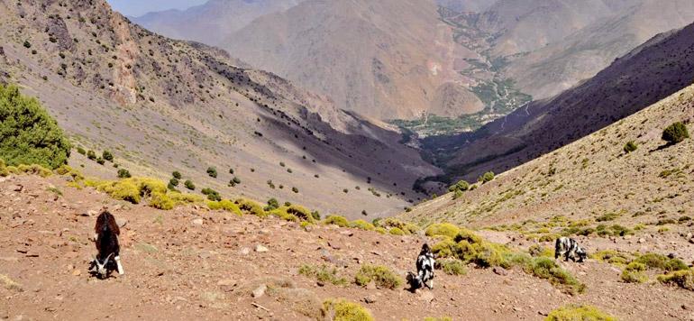 Crédit Agricole du Maroc soutient l'arboriculture durable
