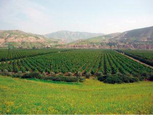 Plan Maroc Vert Plan Maroc Vert Plan Maroc Vert