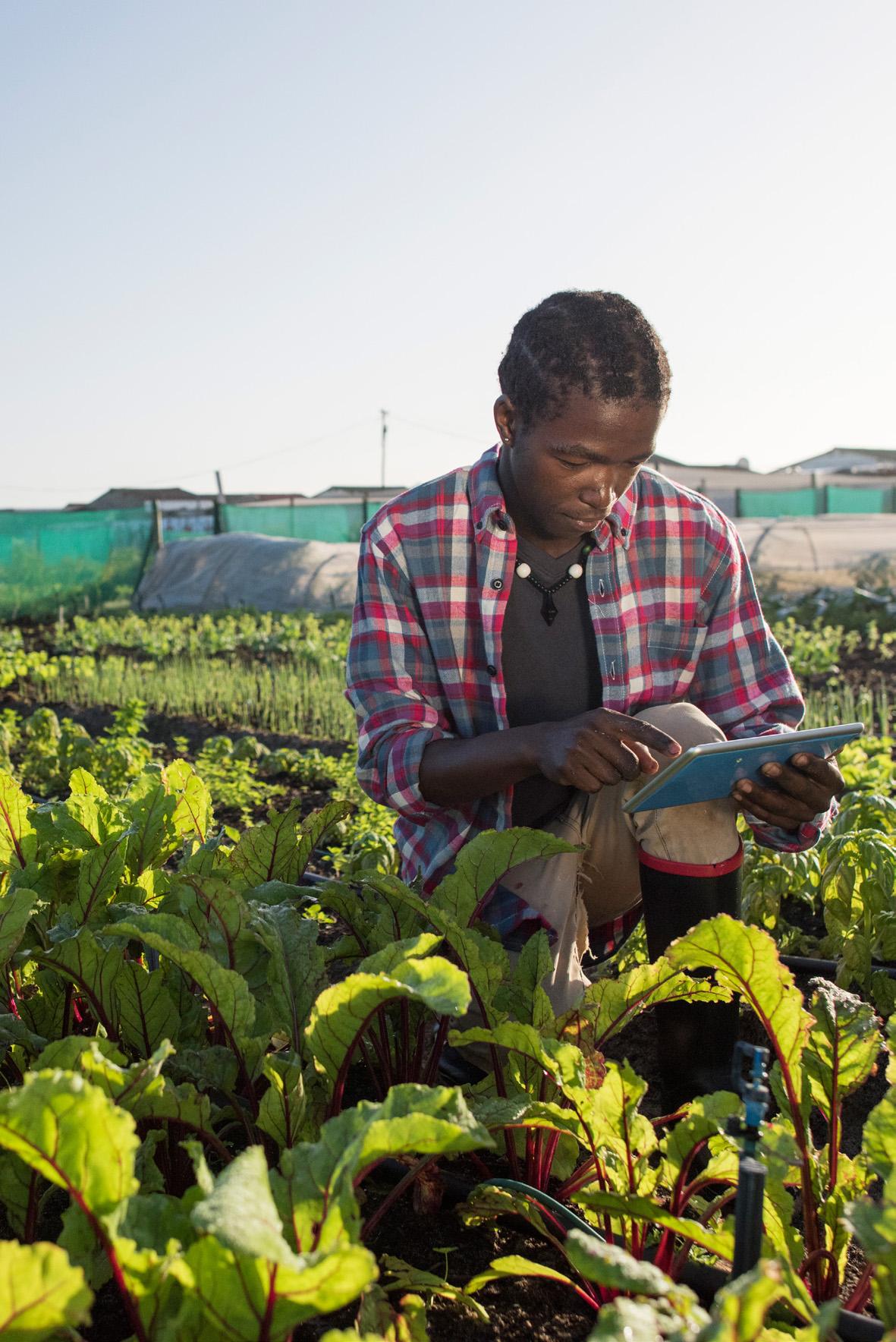 Intégration des migrants subsahariens par… l'agriculture